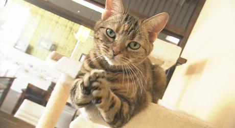 リトルほっぺ第17回個性豊かな猫たち 放送中